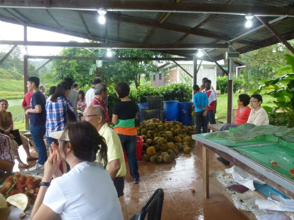 durian-feast-at-orchard-hgts-karak-2511-008